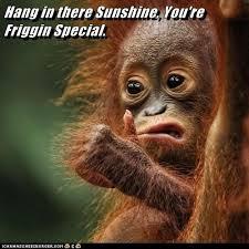 Inspirational Monkey