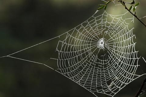 Image result for spider web